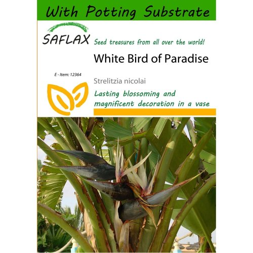 Saflax  - White Bird of Paradise - Strelitzia Nicolai - 5 Seeds - with Potting Substrate for Better Cultivation