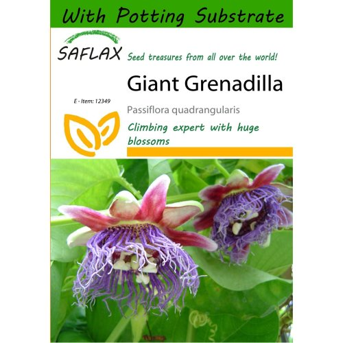 Saflax  - Giant Grenadilla - Passiflora Quadrangularis - 12 Seeds - with Potting Substrate for Better Cultivation