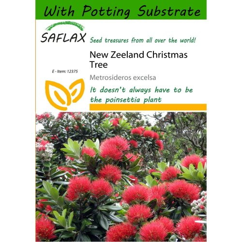 Saflax  - New Zeeland Christmas Tree - Metrosideros Excelsa - 300 Seeds - with Potting Substrate for Better Cultivation