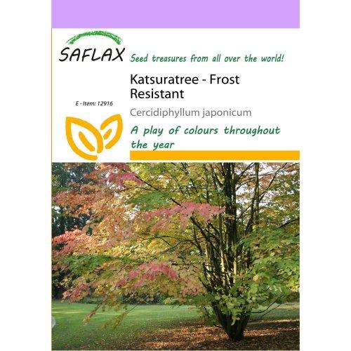 Saflax  - Katsuratree - Cercidiphyllum Japonicum - 200 Seeds