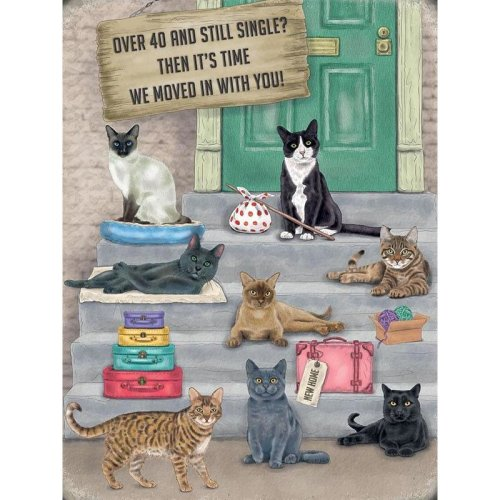 Over 40 and Still Single? Funny Cat Wall Sign