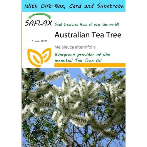 Saflax Gift Set - Australian Tea Tree - Melaleuca Alternifolia - 400 Seeds - with Gift Box, Card, Label and Potting Substrate