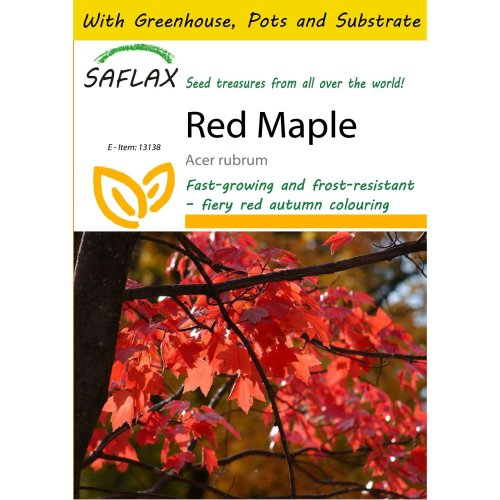 Saflax Potting Set - Red Maple - Acer Rubrum - 20 Seeds - with Mini Greenhouse, Potting Substrate and 2 Pots