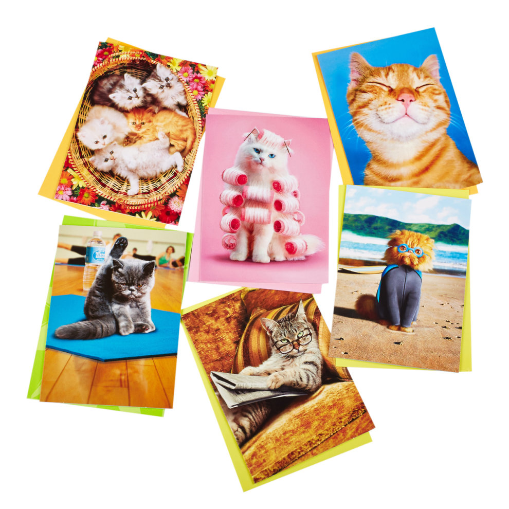 Funny Birthday Cards For Cat Lovers Pack X 6
